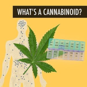 Cannabinoids - Buy CBG (Cannabigerol) Oil and Hemp Oil Products