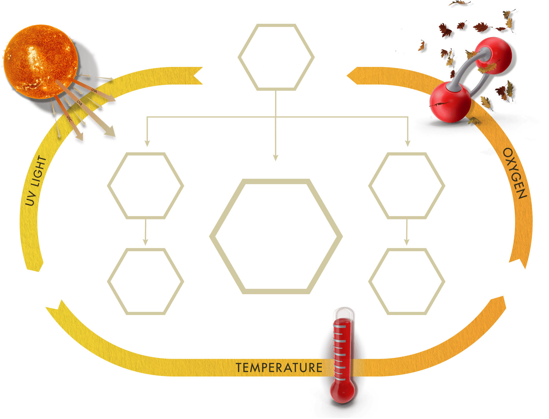 Mother of all Cannabinoids - Buy CBG (Cannabigerol) Oil and Hemp Oil Products